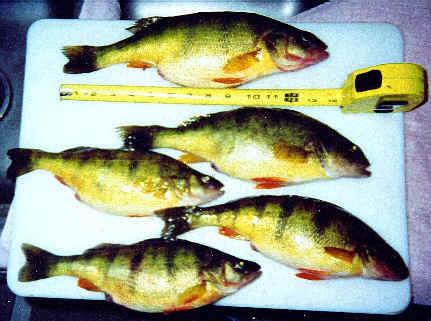 Outdoors niagara fishing for Lake simcoe fishing